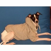 A Warm Hooded IG Sweatshirt Available in Grey  Size S/M [cm]<br>Cannoli loves her Sweatshirt [cm] 10015 Grey size S/M